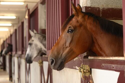 horse barn.jpg