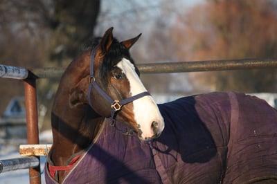 horse-blanket-winter.jpg
