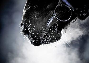 horse-steam-winter.jpg