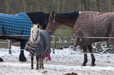 horses-blankets-winter.jpg