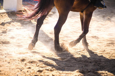 horse-running-footer-arena